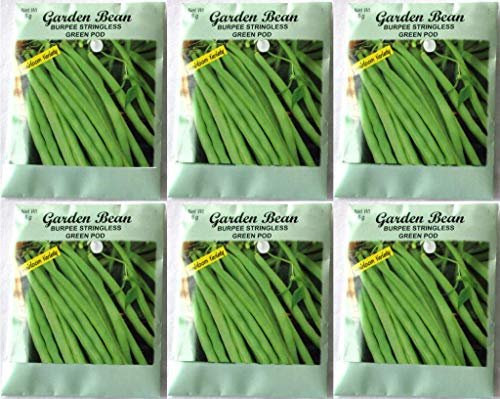 (Valley Greene (6 Pack) Burpee Stringless Green Pod 6 gram/Package Heirloom Variety Seeds)