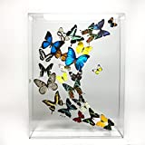 Large Mixed Butterflies in 24''x18'' frame