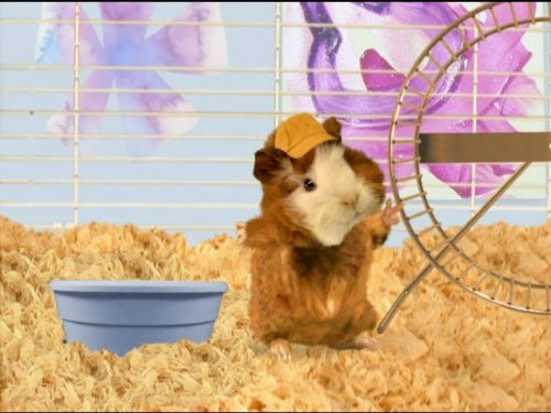 The 8 best wonder pets