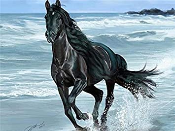 Christmas Horse Drawing.Amazon Com Diy Oil Paint By Number Kit For Adults Beginner
