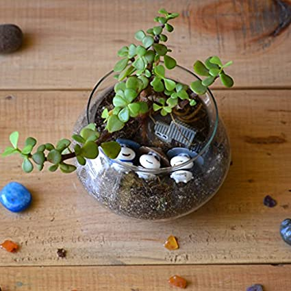 Mybageecha Three Jaded Panda Succulent Glass Terrarium Live Plants