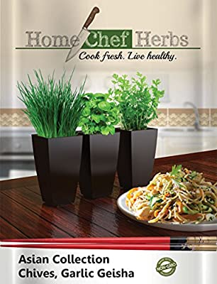 Chinese Garlic Chive Seeds (Geisha) - Asian Collection Non GMO Herb Seeds - Designed For Home Cooks With Limited Gardening Experience - Conveniently Grow Chives Indoors - Garlic Onion Chives