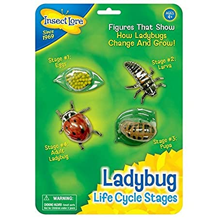 amazon com insect lore ladybug life cycle 4 pc insect figure