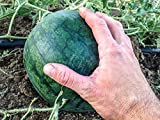 40 Seeds Sugar Baby Watermelon