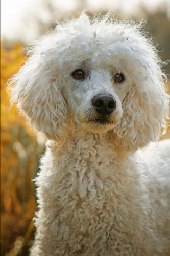 White Poodle Dog Portrait Journal: 150 Page Lined - Poodle White Stocking