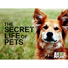 The Secret Life Of Pets Season 1