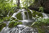 Rainforest & Waterfall