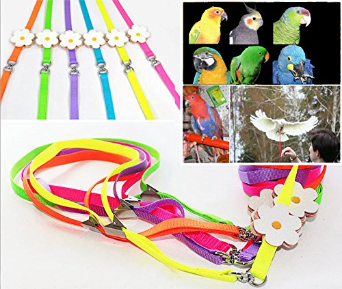 Bird Leash (Beauty Parrot Adjustable Bird Harness and Leash Anti-bite for Bird Parrot African Grey Cockatoo Macaw Ringneck Parakeet Cockatiel(1Pcs Random Color))