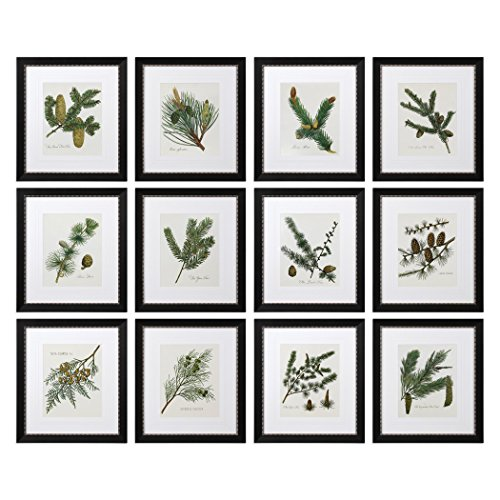 Set 12 Botanical Pine Cone Wall Art Prints | Evergreen Tree Floral Green Brown Framed