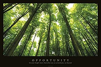Amazon.com: Opportunity Inspirational Poster Print: Trees Poster ...