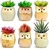 apartment living room decorating ideas Amaze Owl Assorted Artificial Succulent Plants and Owl Planters | Set Of 6 Mini Faux Plants and Ceramic Pots | Indoor Office Table Decorations| Housewarming Ideas| Living Room Table Shelf Desk Decor