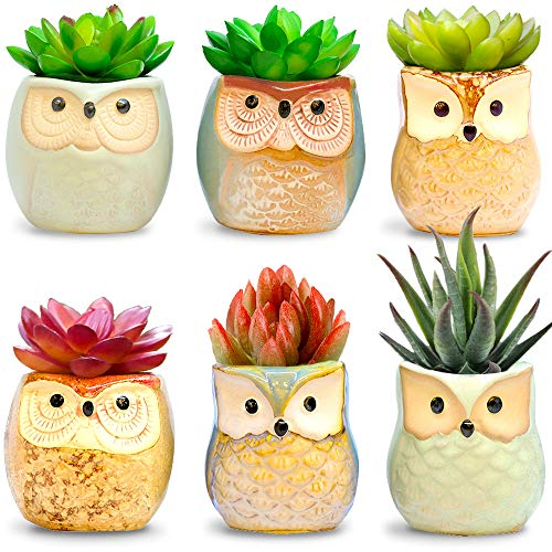 Amaze Owl Assorted Artificial Succulent Plants and Owl Planters | Set Of 6 Mini Faux Plants and Ceramic Pots | Indoor Office Table Decorations| Housewarming Ideas| Living Room Table Shelf -