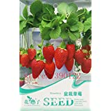 bonsai strawberry seeds Original Pack 50 pcs / Bag Potted Strawberry as Fruits and Vegetables Seeds