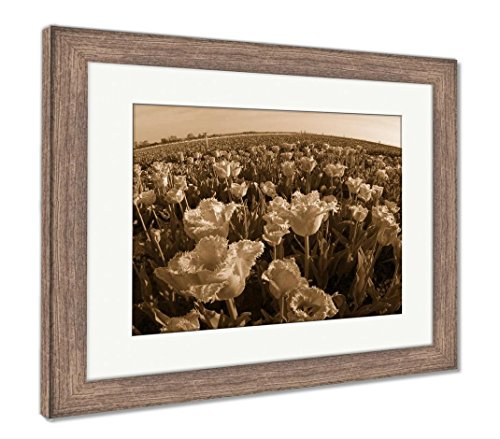 Tulips Field in Mountains, Wall Art Home Decoration, Sepia, 26x30 (Frame Size), Rustic Barn Wood Frame, AG6540331 ()