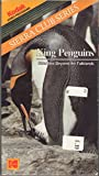 Sierra Club Series - King Penguins Stranded Beyond the Falklands [VHS]