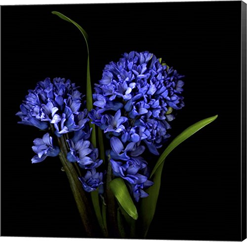 Hyacinth 1 by Magda Indigo Canvas Art Wall Picture, Museum