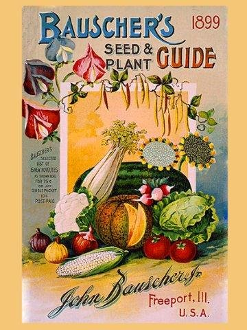 CANVAS Crate Label of Fruits and Vegetables Seed Plant Guide 1899 Freeport Usa 12