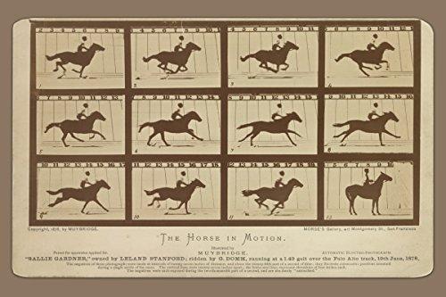 ClassicPix Photo Print 12x18: Horse in Motion, Gait Over The Palo Alto Track, 19th June.