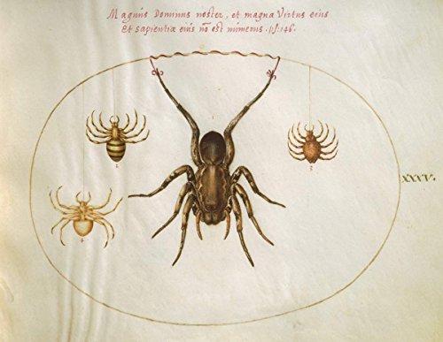 Artist  Joris Hoefnagel   Drawing  Animalia Rationalia Et Insecta  Ignis   Plate Xxxv   Date  C  1575 1580   Vintage Fine Art Print