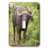 3dRose lsp_70869_1 Water Buffalo, Hluhulwe Game Reserve, South Africa Single Toggle Switch