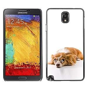 FECELL CITY // Duro Decorativo Carcasa de Teléfono PC Caso Funda / Hard Case Cover forSamsung Note 3 N9000 // Funny Glasses Dog Cute