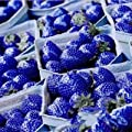 Hot 200 PCS Rare Blue Strawberry Seeds Fruits and Vegetables Balcony Potted Strawberry Fragaria Ananassa Seeds
