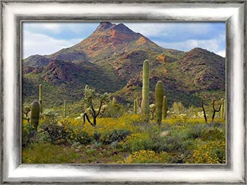 (Saguaro and Teddybear Cholla amid Flowering Lupine and California Brittlebush 24x19 Silver Contemporary Wood Framed Canvas Art by Fitzharris, Tim)