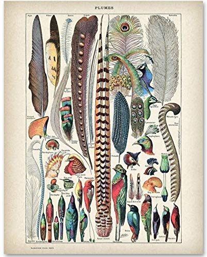 (Plumes Feather Illustration - 11x14 Unframed Art Print - Great Gift for Bathroom Decor)