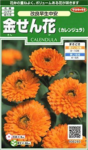 サカタのタネ 実咲花6281 金せん花 改良早生中安 00906281