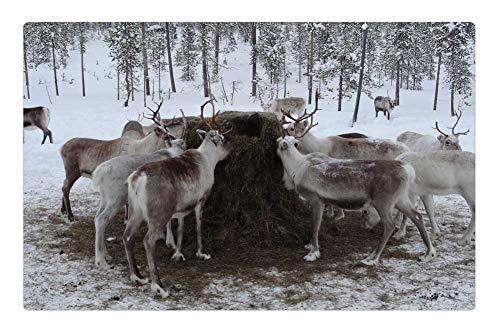 Tree26 Indoor Floor Rug/Mat (23.6 x 15.7 Inch) - Lapland Animal Feed Reindeer Farm ()