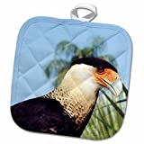 Crested Caracara, captive bird in a rehab facility - US10 BFR0085 - Bernard Friel Potholder is perfect for daily use, while coordinating well with any kitchen décor. This 8 by 8 inch, 50/50 cotton/polyester blend, pot holder features a quilte...