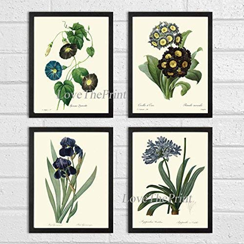 Botanical Print Set of 4 Prints Unframed Antique Blue Morning Glory Primula Primrose Iris Agapanthus Lily of the Nile Flowers Wildflowers Home Room Decor Wall Art ()