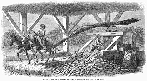 (South Sugar Plantation NGrinding The Cane In The Mill A Sugar Plantation In Louisiana Wood Engraving American 1871 Poster Print by (18 x 24))