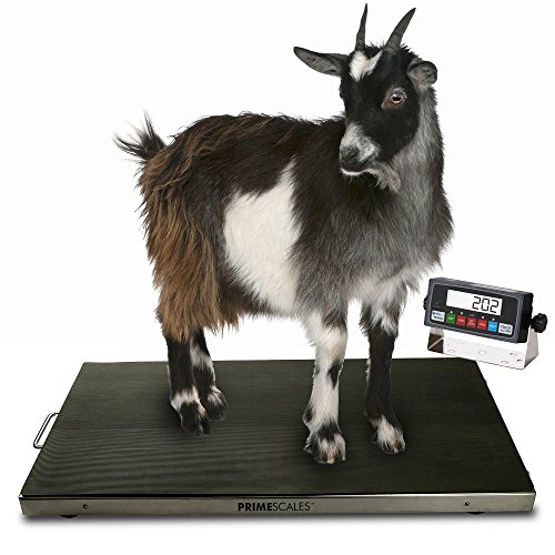 """Veterinary Scale Digital - Prime Scales   700lb Veterinary Scale   Digital Weighing Equipment   Anti-Slip Mat for Pets or Livestock   Determine Weight for Small to Medium Sized Animals   Peak Hold Function   38"""" x 20"""" x 2"""""""