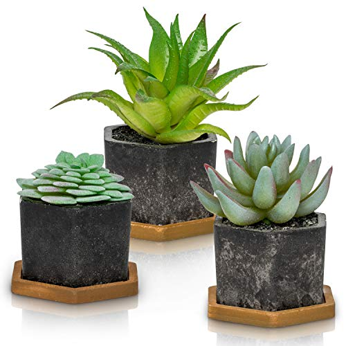Artificial Succulent Plants with Pots (Set of 3) | 3 Faux Plants in Potted Gray Succulent Planters with Bamboo Base | Modern Home Décor Accents for the Office, Desk, Living Room, and More