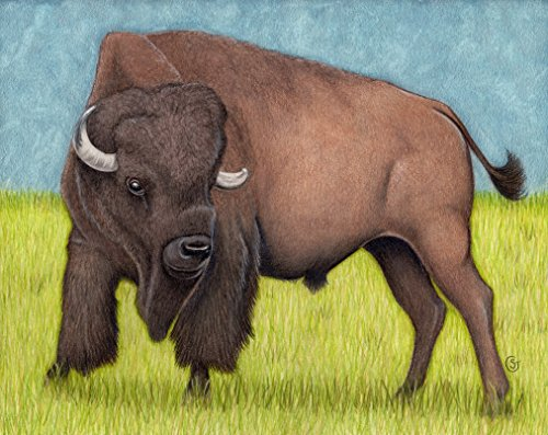 (Bison Buffalo Watercolor Painting Mixed Media Wild American 8