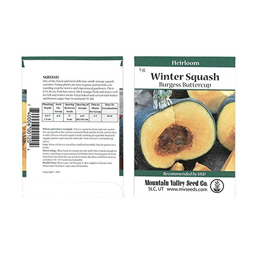 - Burgess Buttercup Winter Squash Garden Seeds - 5 Gram Packet - Non-GMO, Heirloom - Vegetable Gardening Seed