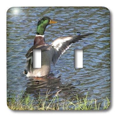 3d Rose 3dRose LLC  lsp_11537_2 Drake Male Mallard Duck D...