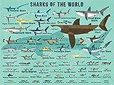 Oopsy Daisy Fine Art for Kids Tiburones del mundo Canvas Wall Art de Daviz, 40 x 30