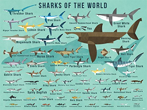 Oopsy Daisy Fine Art for Kids Sharks of The World Canvas Wall Art by Daviz, 24 x (Most Dangerous Sharks)