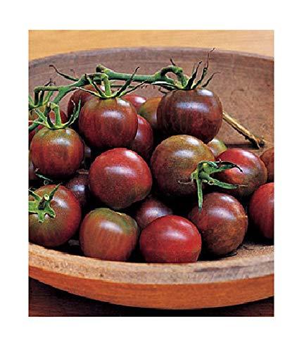(David's Garden Seeds Tomato Cherry Black OS8888 (Black) 50 Non-GMO, Organic Seeds)