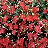 Outsidepride Nicotiana Crimson Bedder - 5000 Seeds
