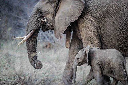 Elephant Family (Elephants Fine Art)