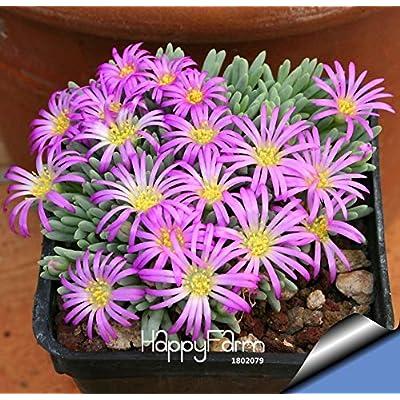 100pcs/Pack Beautiful Rare Flower Garden Cactus Succulent Flores Kaktus lithops Hybrid Bonsai Plants, #CWEV4N : Garden & Outdoor