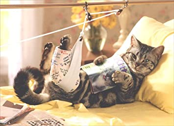 Image result for get well soon cats