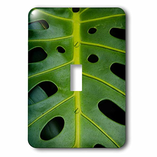 3D Rose lsp_209341_1 Monstera Deliciosa, Iao in Hawaii, USA. -Single Toggle Switch by 3dRose