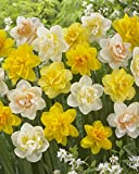 Bloomsz Double Daffodil Mix Flower Bulb (8-Pack)