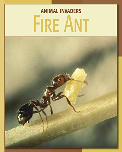 fire-ant-21st-century-skills-library-animal-invaders