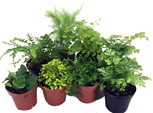 riums/Fairy Garden - 8 Different Plants - 2