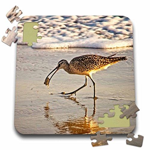 Game Birds Boehm (3dRose Boehm Photography Bird - Long Billed Curlew Wading Bird - 10x10 Inch Puzzle (pzl_282333_2))